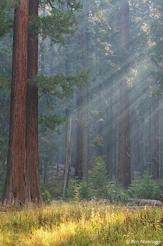 Sequoia031019-061