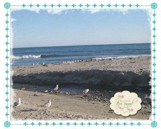 411103_TCD_beach
